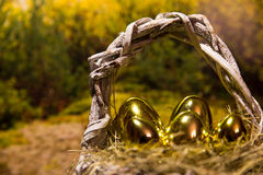 Golden easter eggs in a nest Stock Photos