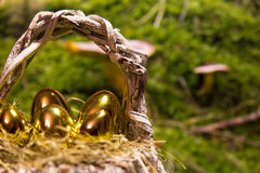 Golden easter eggs in a nest Stock Images