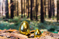 Golden easter eggs in a wood Royalty Free Stock Images