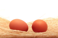 Golden egg in a makeshift nest. On a white background Royalty Free Stock Image