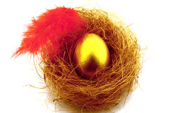 Golden egg in nest with a red feather Royalty Free Stock Images
