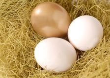 A golden egg and two white eggs in a nest Stock Photo