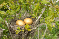 Golden eggs Stock Photography