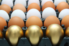 Golden eggs and Chicken eggs Royalty Free Stock Image