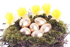 Golden eggs and daffodils in bird nest over white Royalty Free Stock Image