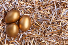 Golden eggs Stock Image