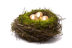 Golden eggs in a nest Stock Image