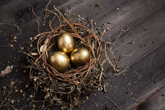Golden eggs in nest Stock Image