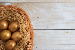 Golden eggs in the nest Stock Images