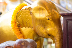 Golden elephant head statue and yellow flower  in Thailand templ Stock Photos