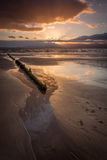 Golden Evening. Beautiful sunset at the beach during low tide. From the middle of the frame out to near the edge of the frame the viewer can see wooden erosion Royalty Free Stock Image