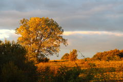 Golden evening colors Royalty Free Stock Images