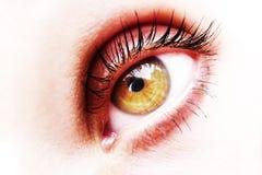 Golden eye. Isolated on yhe white background Stock Photo