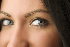 Golden eyes Stock Photography