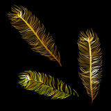 Golden Fabulous feather of magic bird Royalty Free Stock Photography