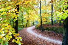 Golden fall royalty free stock images