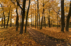 Golden fall Royalty Free Stock Image