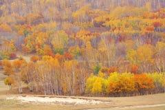 Golden fall Stock Photos