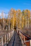 Golden fall bridge Royalty Free Stock Photos