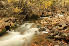 Golden fall color by a stream in the Utah mountains. Royalty Free Stock Photo