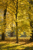 Golden fall Stock Images