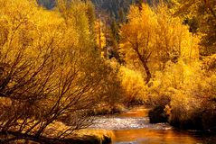 Golden fall colors reflecting into stream in the Yosemite Valley