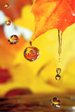 Golden fall drops. Stock Photography