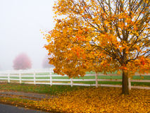 Golden Fall Royalty Free Stock Photography
