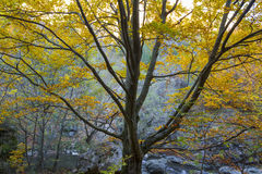 Golden Fall Foliage Autumn Yellow Tree Stock Photo