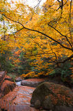 Golden fall forest Stock Photos
