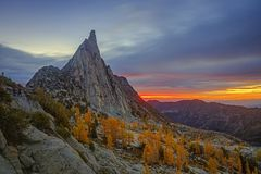 Golden fall larches in the Cascade Mountains, Washington, USA royalty free stock image