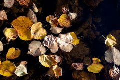 Golden fall leaves Stock Image
