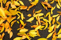 Golden Fall Leaves Background Royalty Free Stock Image