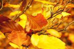 Golden Fall Leaves. Orange - Yellow Autumn Background stock image
