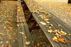 Golden fall leaves on picnic tables Royalty Free Stock Photo