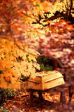 Golden Fall Leaves and Yellow Row Boat Display Aut Stock Image