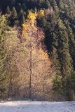 Golden fall road Royalty Free Stock Photography