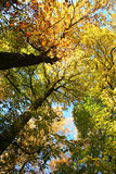 Golden fall in Russia Royalty Free Stock Image