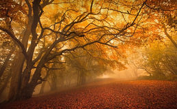 Golden Fall season forest stock photo