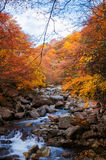 Golden Fall season forest stock image