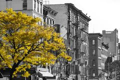 Golden fall tree in black and white NYC street scene. On 2nd Avenue in the East Village of Manhattan, New York City royalty free stock photos