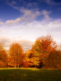 Golden fall trees in evening sunlight Stock Photography