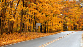 Golden fall trees Stock Image