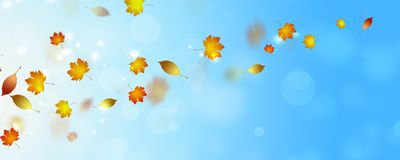 Golden falling leaves. Autumn bright banner with falling golden leaves stock image