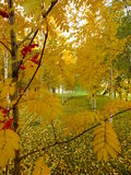 Golden falltime Royalty Free Stock Photography