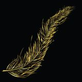 Golden feather Royalty Free Stock Photo