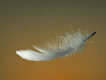 Golden feather, soft and gentle, floating. Beautiful. Catches the light. Delicate. Metaphor for softness,gentleness etc maybe Royalty Free Stock Image