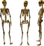 Golden Female Skeletons. Rendering showing a gold female skeleton from the back, front and left side Stock Photo