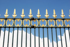 Golden Fence Royalty Free Stock Photo