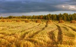 Golden Field Stock Photography